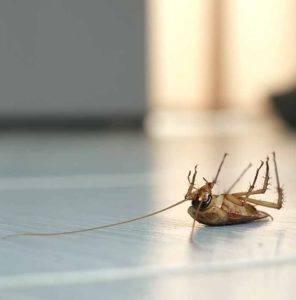 pest control Brighton