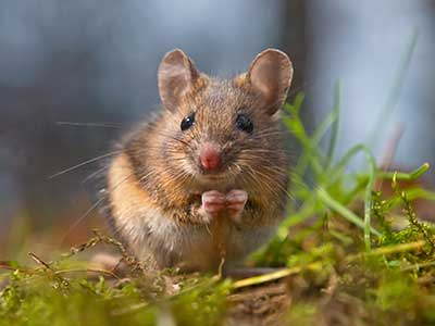 mouse sitting in a field