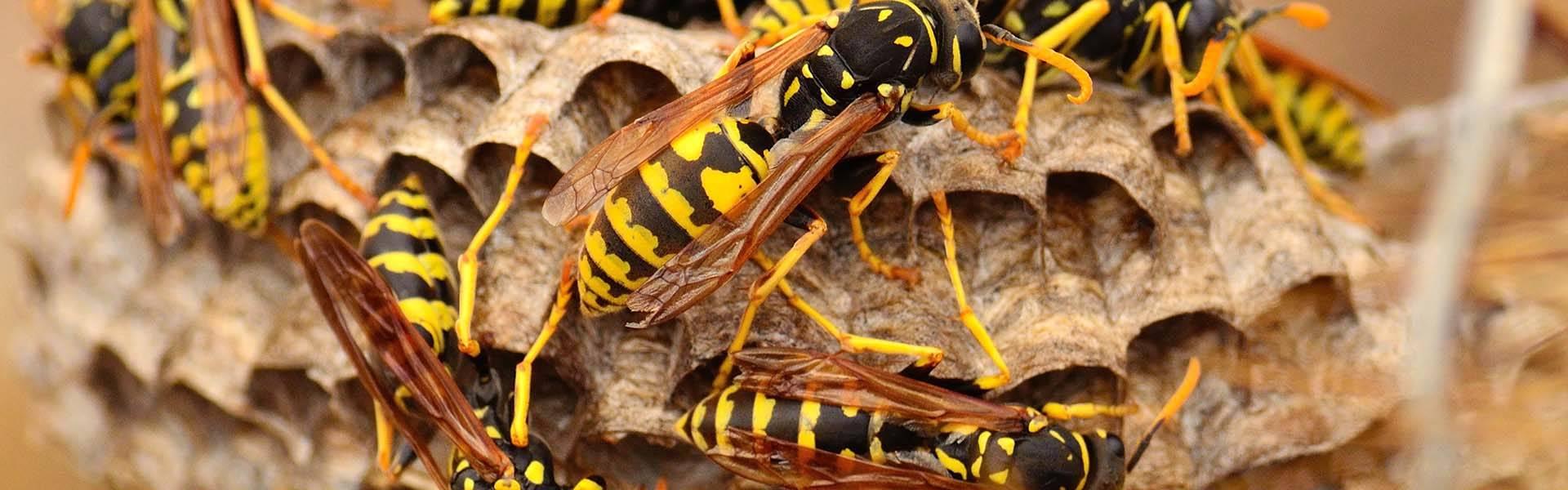 wasp control Brighton
