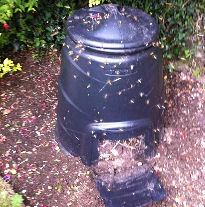 wasp removal Brighton