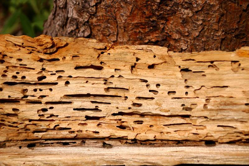 wood with holes in it from woodworm