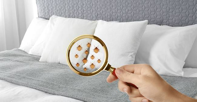The Signs Of Bed Bugs