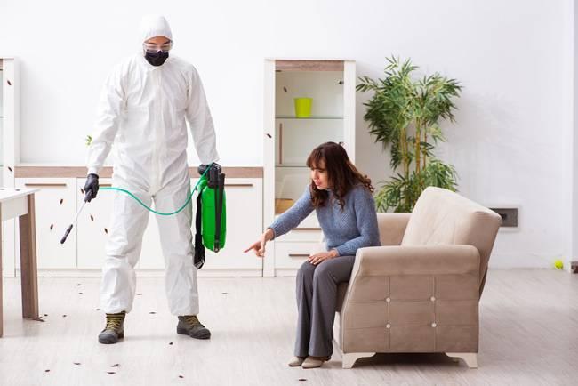 Do You Need Pest Control Maintenance